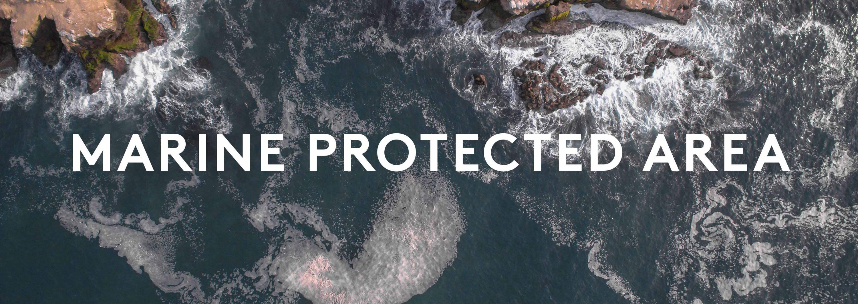 La Jolla's Marine Protected Area