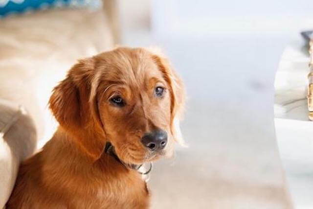 How to Naturally Balance Your Pup's Gut Health