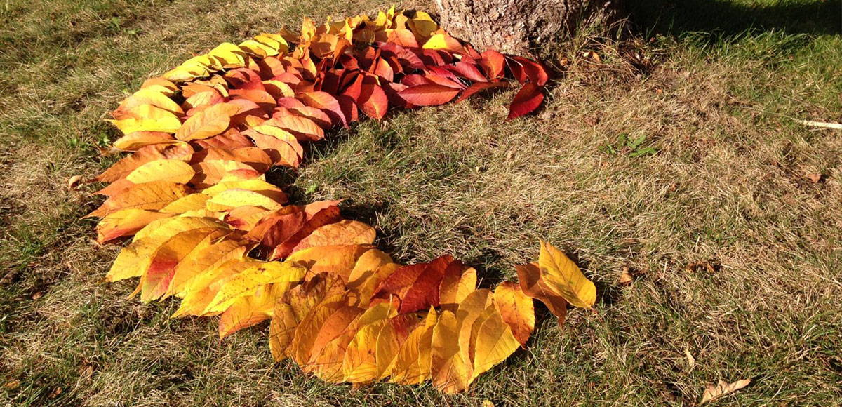 Array of orange and red leaves on the grass near a tree