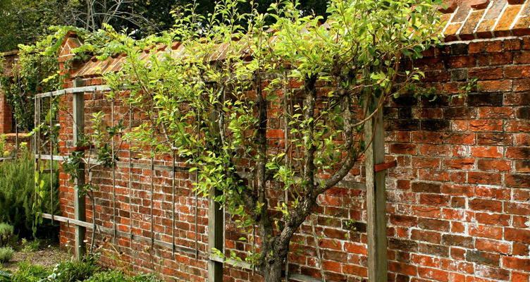 Fruitbomen snoeien voor een rijke oogst