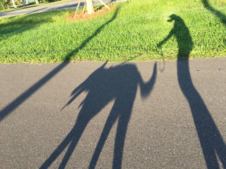 Shadow p
