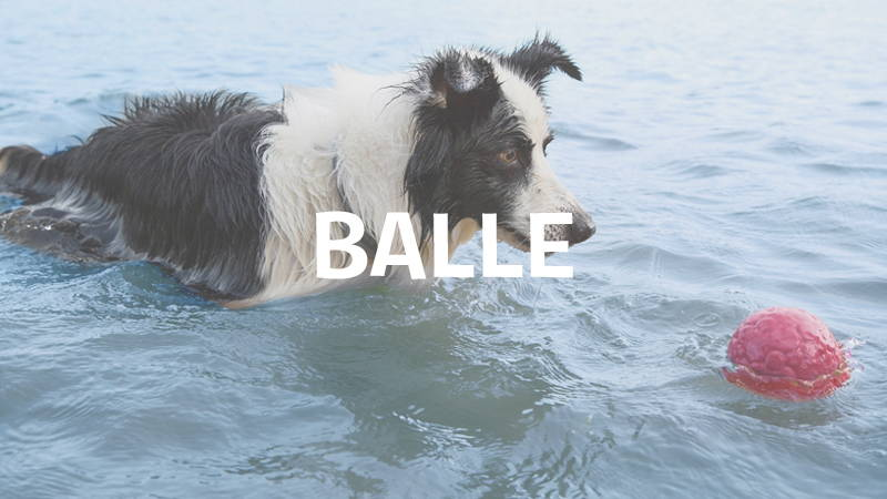 inooko-balle-pour-chien