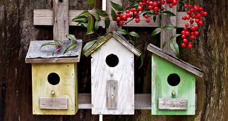 A madarak téli támogatása
