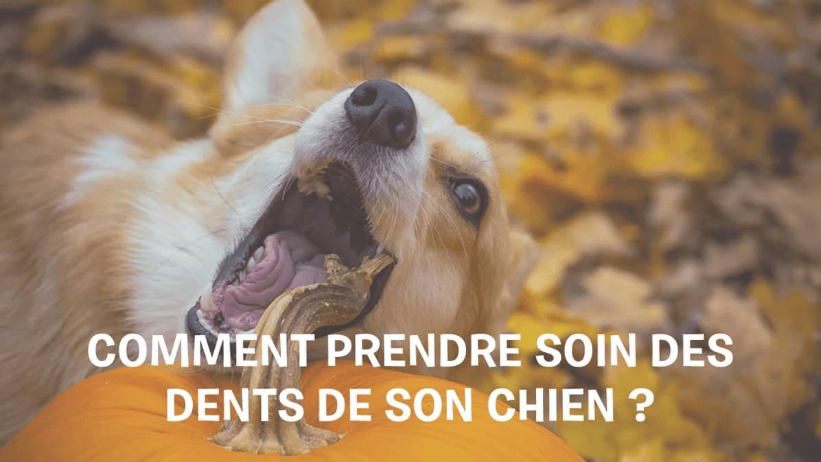 Entretien-dents_chien-santé-buccodentaire-mauvaise-haleine-chien