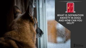 what is separation anxiety in dogs and how can you help