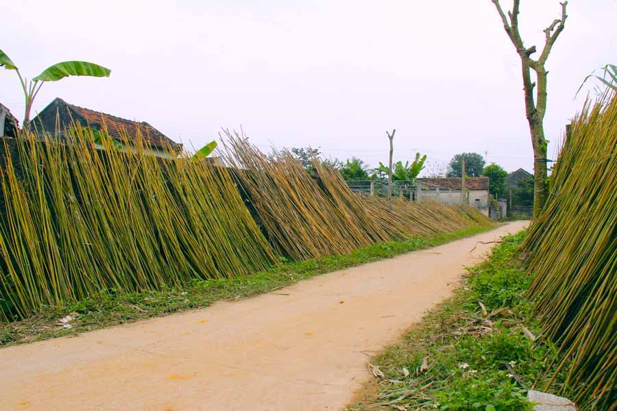 Bamboo pieces drying on the side of the road
