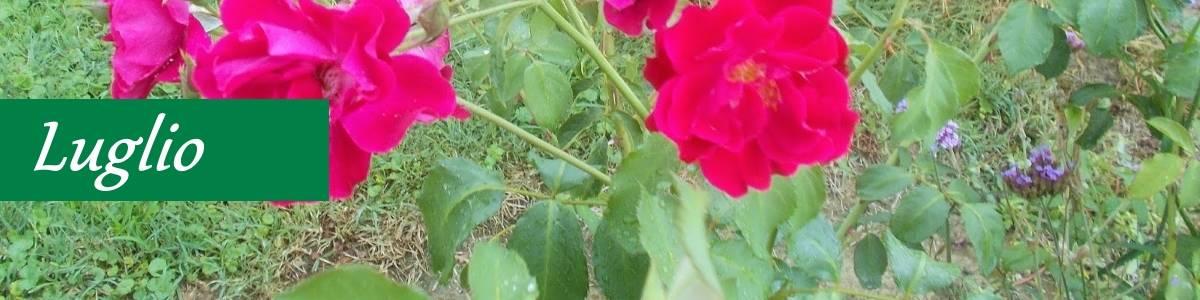 Potatura piante luglio giardino biologico