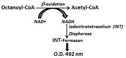 Oxidation Cycle