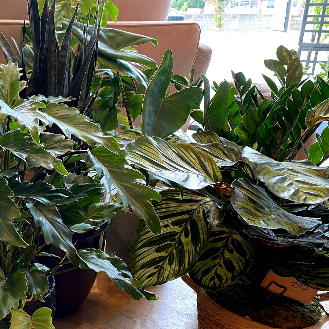 New House Plants