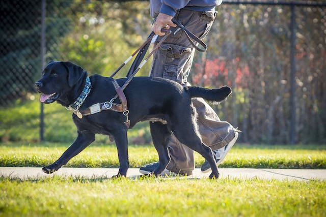 On Guide Dog Day: Helping Guide Dogs to Have Healthy Guts