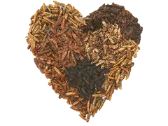 Grubblies or Mealworm? Make the best decision for your flock