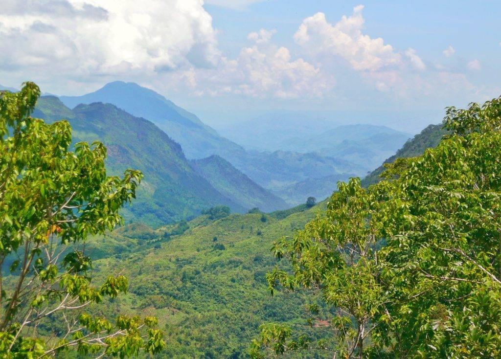 High Quality Organics Express Guatemala Hills