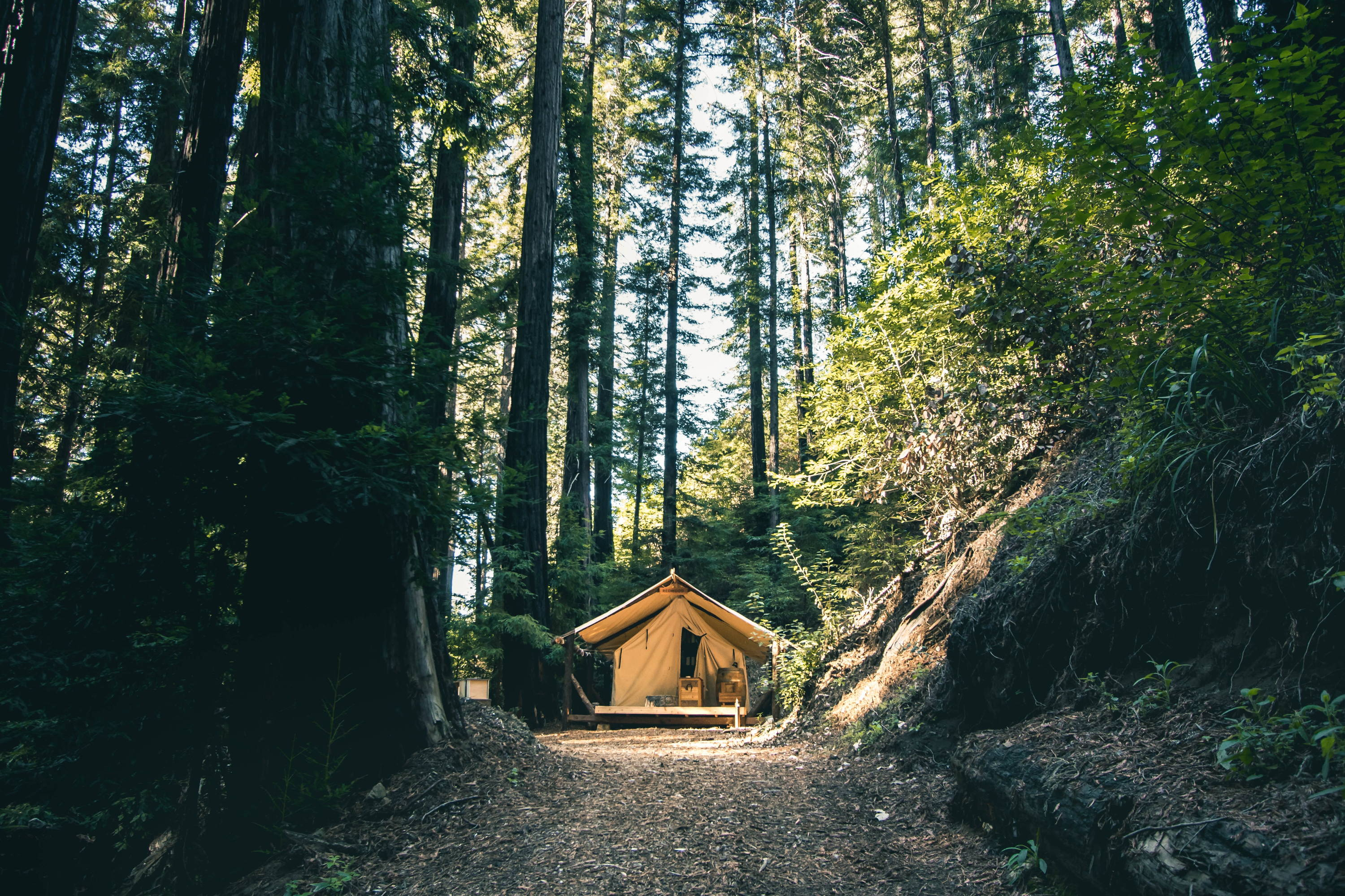 Best Parks for Backpacking Big Sur.  Hut sites isolated in the forest with hillside to the right and tall trees all around.
