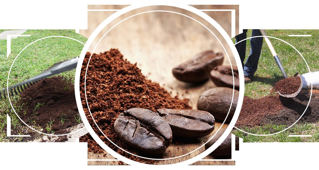 A closeup of coffee beans