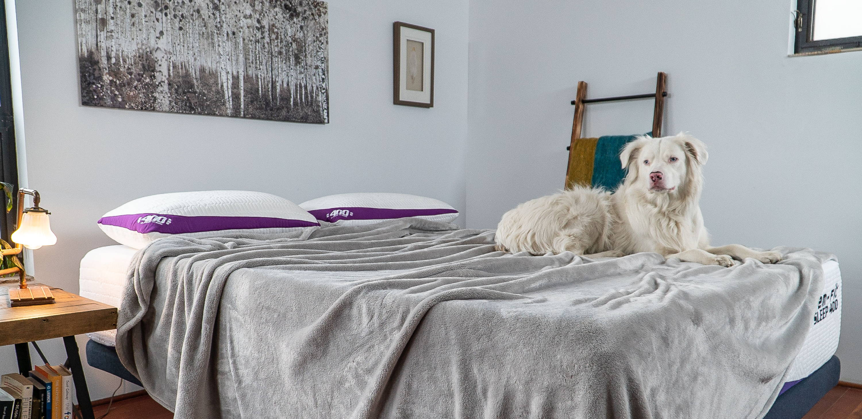 Sleep Calculator - Master your sleep cycles for the best recovery. dog on advanced cooling memory foam mattress