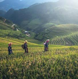 women-working-in-fields-buy-fair-trade