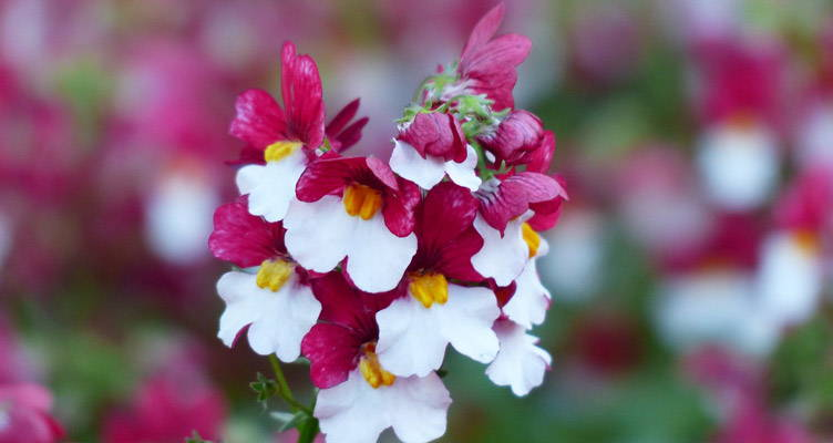 Splendeur de la couleur avec des plantes  de conteneurs