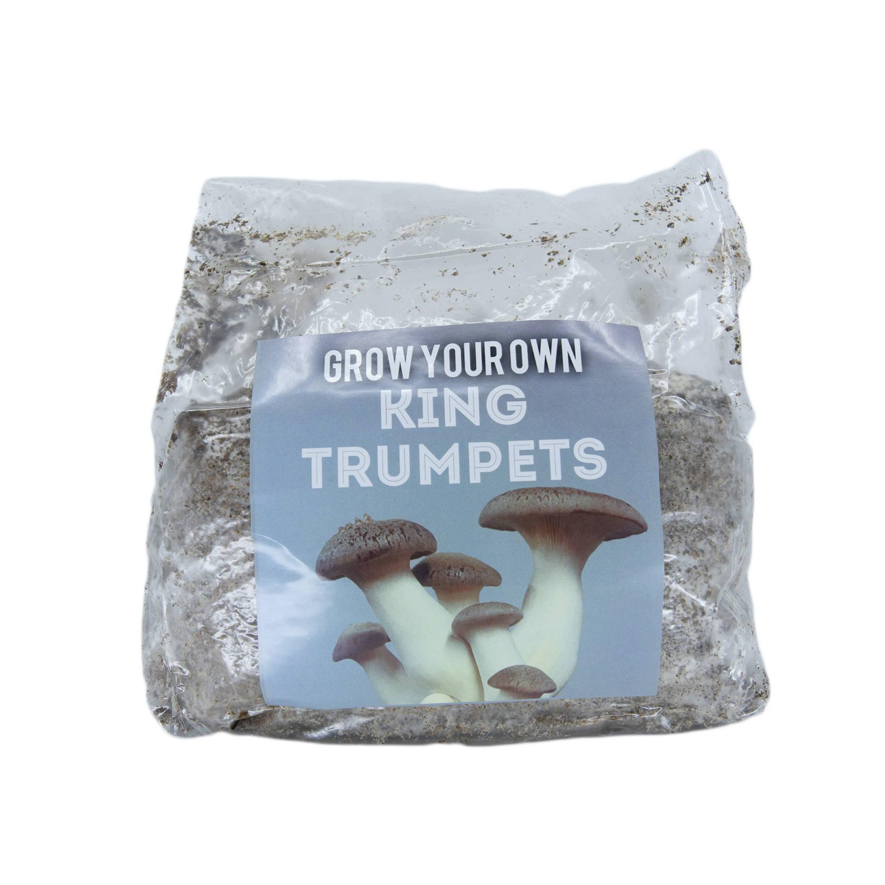 king trumpet grow kits