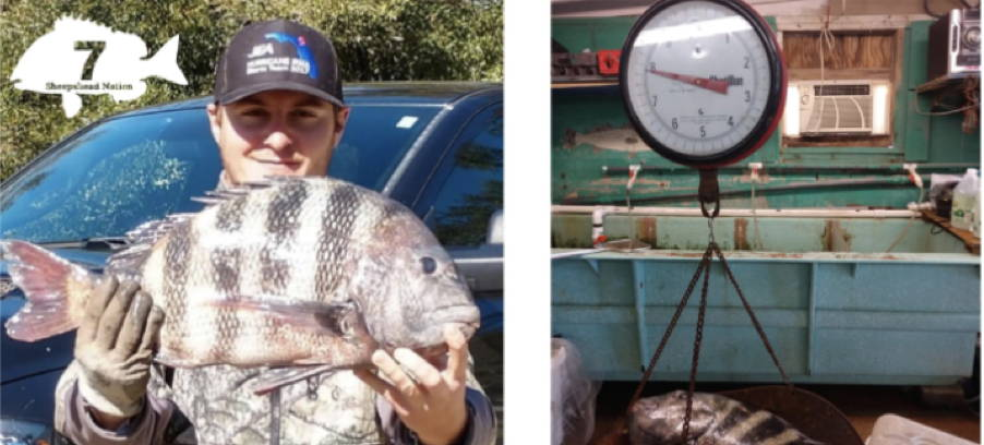 Brandon Prato 7lb Sheepshead Club