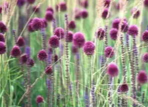 Top 5 goldene Blumenzwiebeln – Stauden-Kombinationen