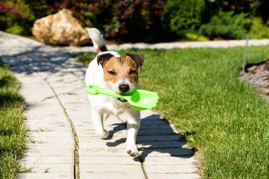 A Jack Russell Terrier runs along a walking path with a green plastic shovel in its mouth