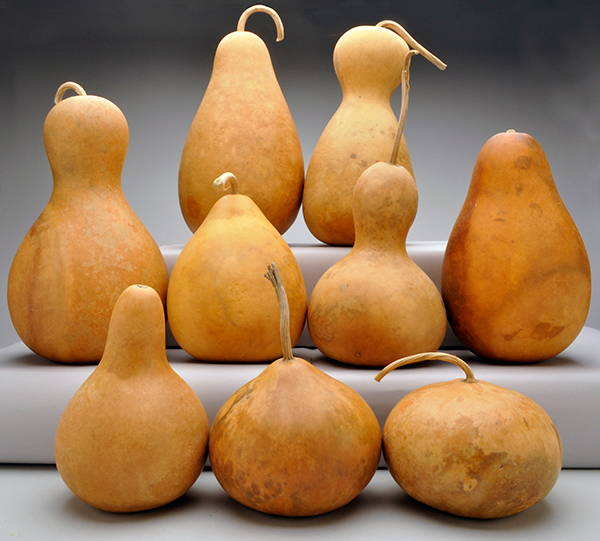 Pre-Boxed Clean Mix Shape Gourds