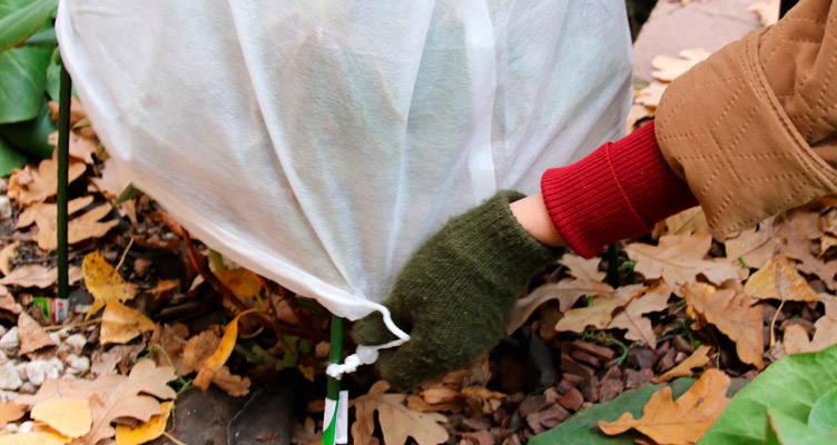 Ochrana rostlin před mrazem