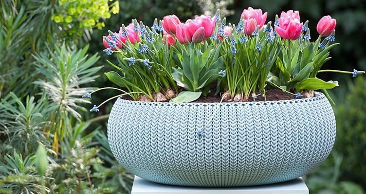 Plantation des bulbes à fleurs en pot