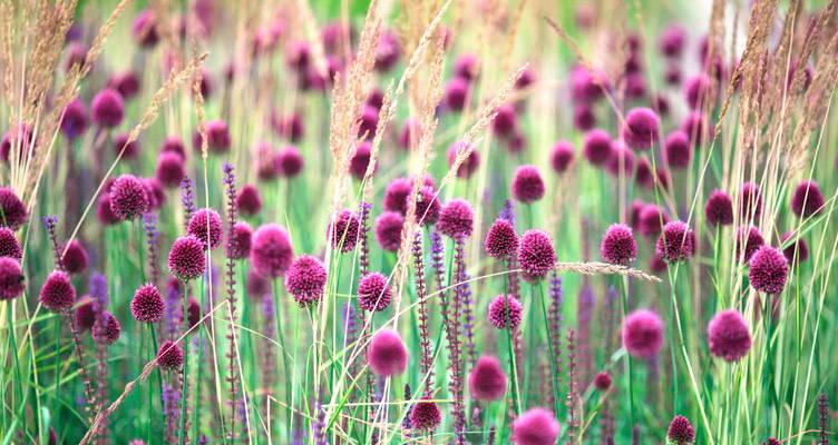 Top 5 gouden bloembol - vaste planten combinaties