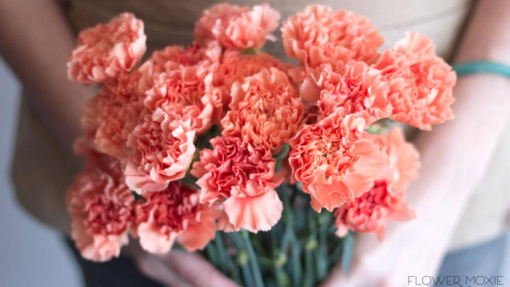 apricot carnation flower