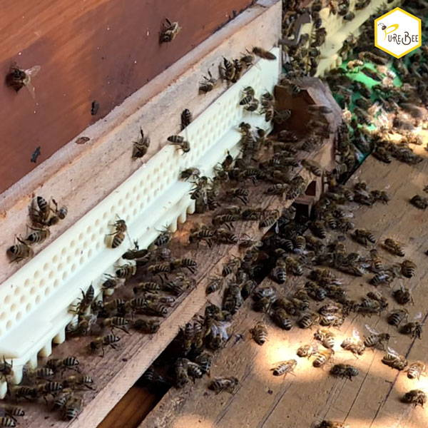 Bees fly in the stick | PureBee