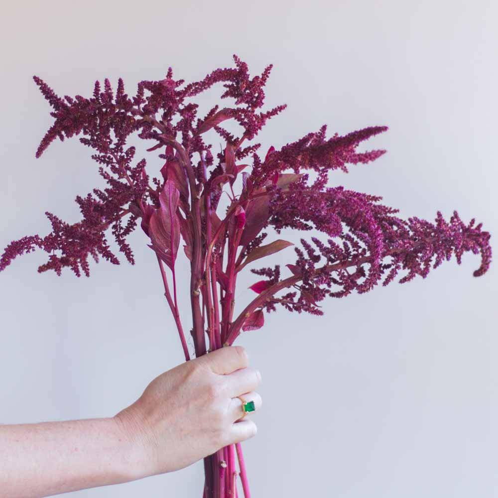 Amaranthus Flowers