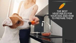 The best vegetables for your dog and how to prepare them