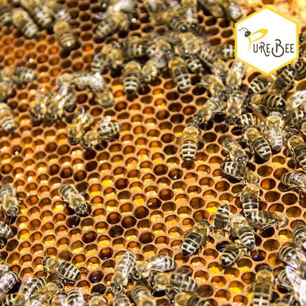 Honigbienen auf einer Honigwabe