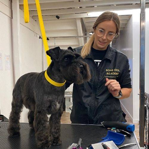 Discounted Dog Grooming With Student Dog Groomers in Hove, East Sussex, Free Dog Grooming