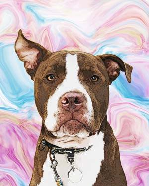 pitbull on creamy background