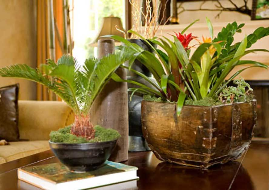 How to Keep Tropical Trees Humid in a Dry Climate