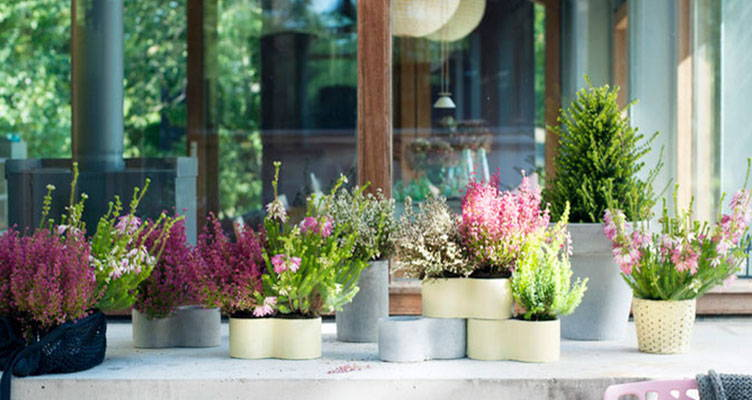 Tuinplant: Winterheide