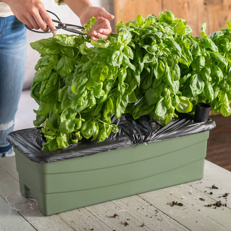 Sage EarthBox Junior Container
