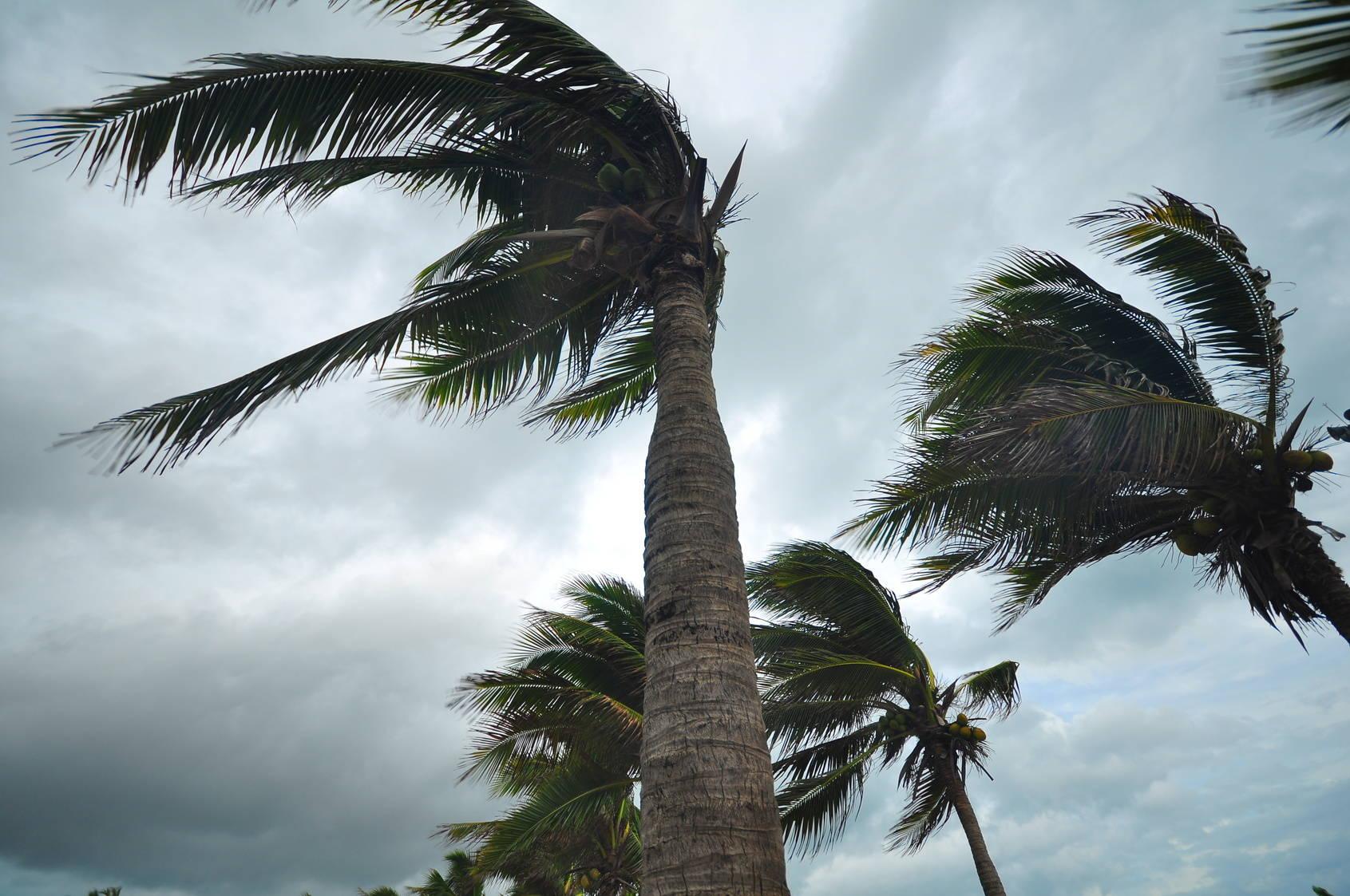Hurricane Survival Tools