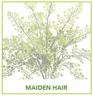 ARTIFICIAL MAIDEN HAIR PLANTS