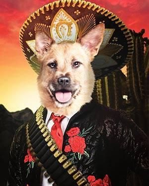 dog in sumbrero
