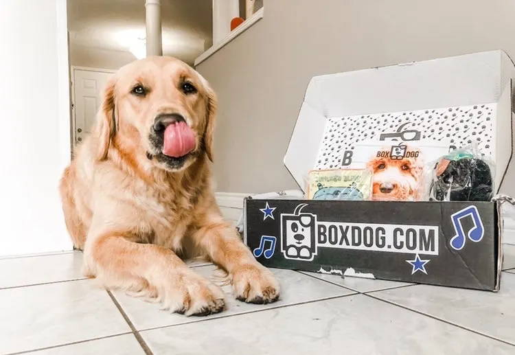 Take 50% Off FIRST BoxDog Subs...