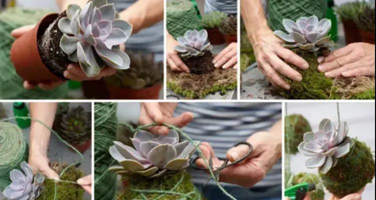 Facile et ingénieux: L'art du Kokedama - Nouvelle tendance de plante suspendue !