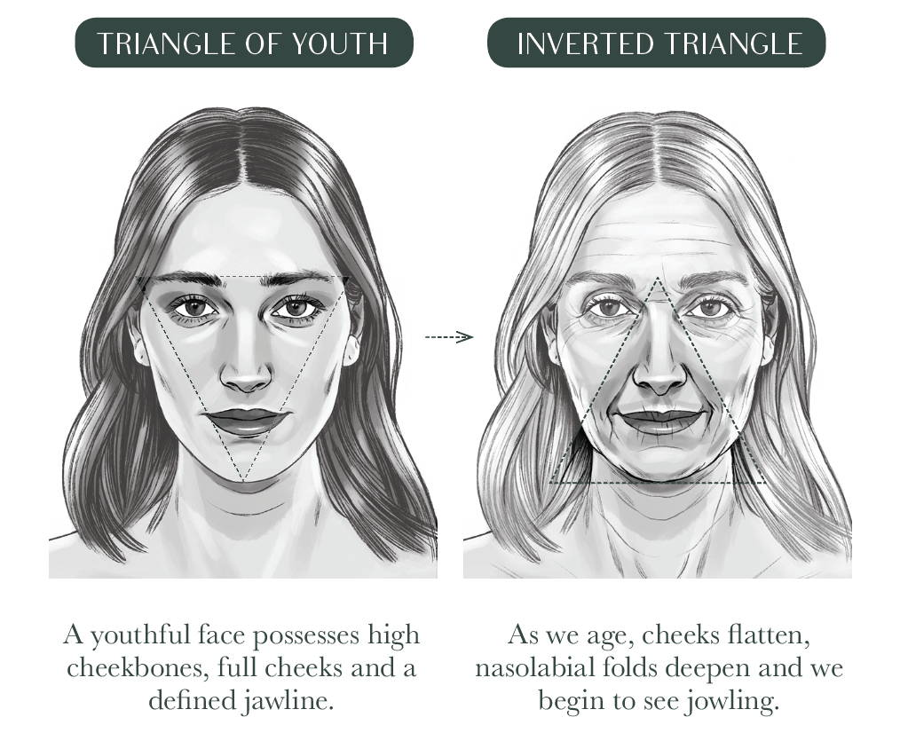 Triangle of Youth Aging Process