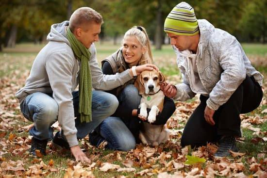 Three people huddle around a small dog in a field in front of a wooded area
