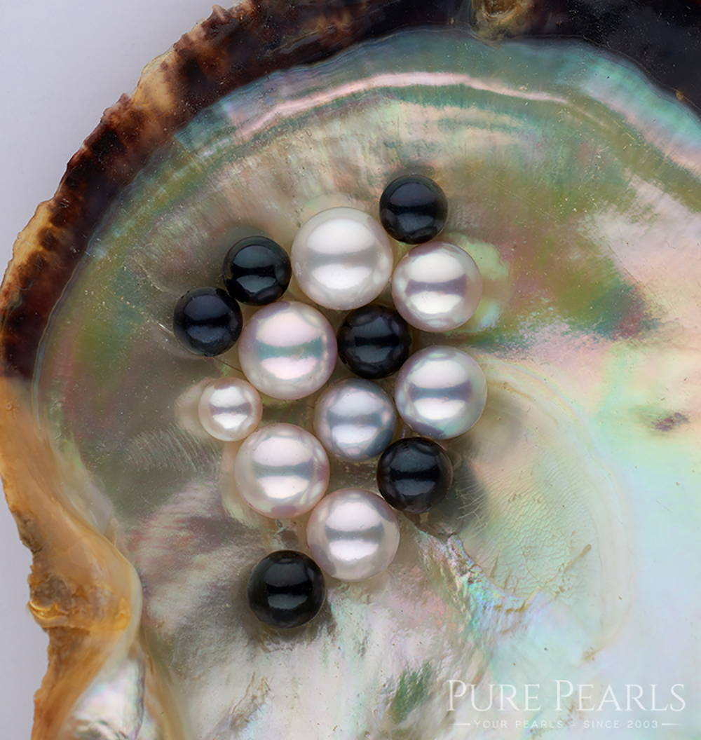 Akoya Pearl Colors in Shell: White, Blue and Black Colors