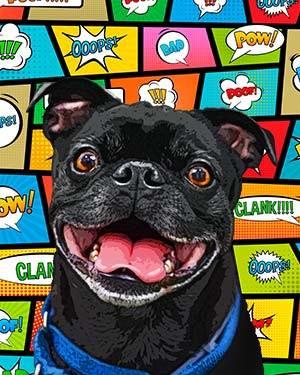 pug pop art