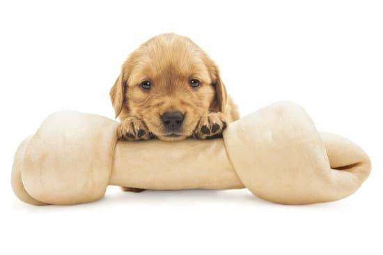 How to Safely Give Rawhides for Puppies