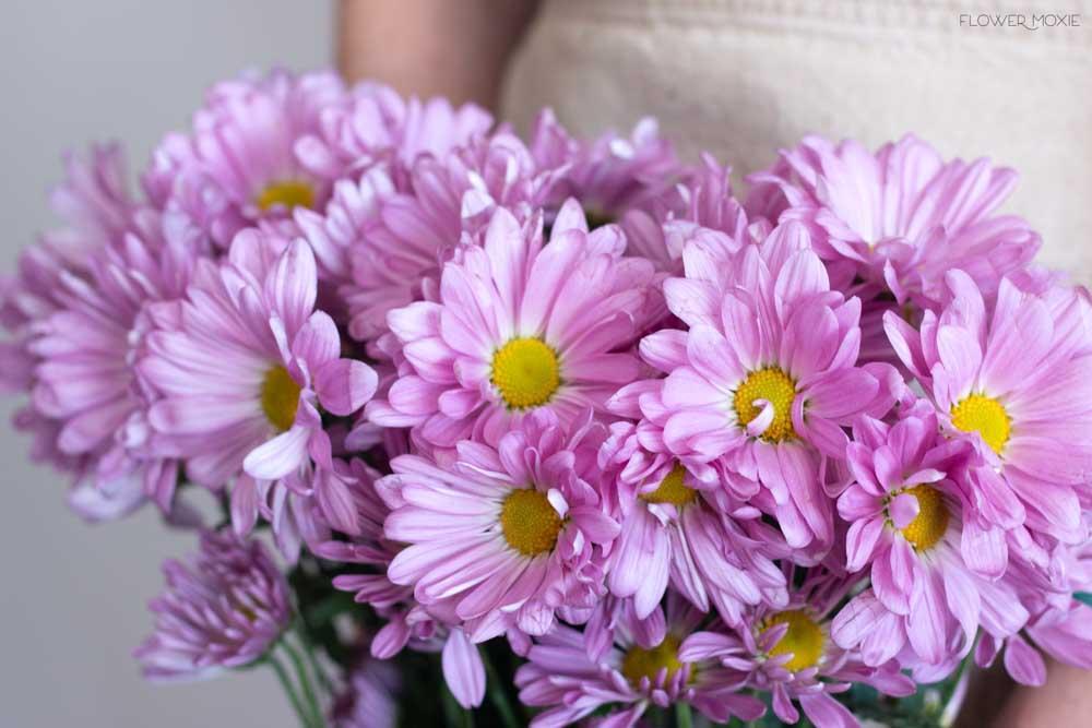 Lavender Daisy Poms